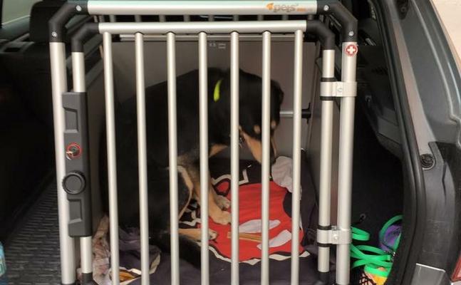 bewusstsein gegen hitzetod von hunden im auto jetzt sch rfen. Black Bedroom Furniture Sets. Home Design Ideas
