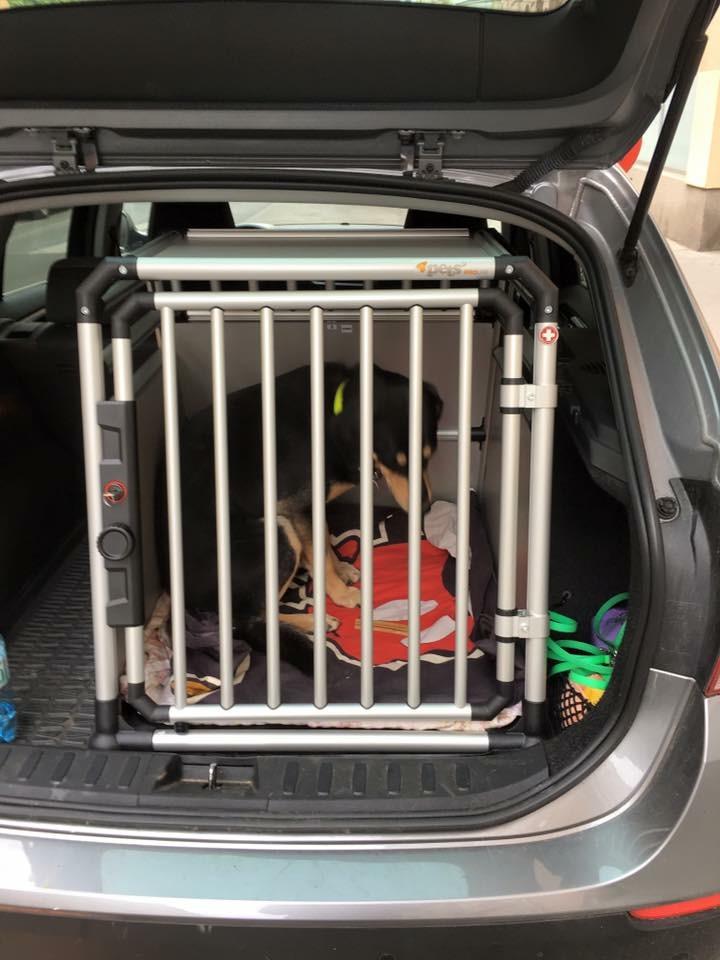 bewusstsein gegen hitzetod von hunden im auto jetzt. Black Bedroom Furniture Sets. Home Design Ideas